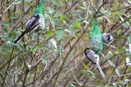 les lettres,les oiseaux,givre 091.JPG