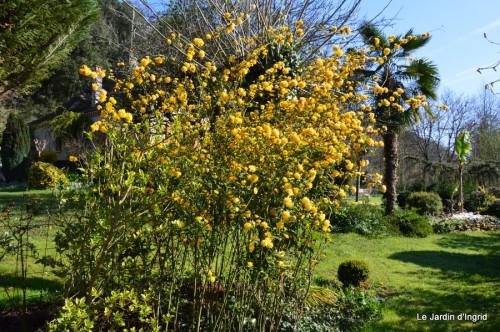 tour du jardin printemps 021.JPG