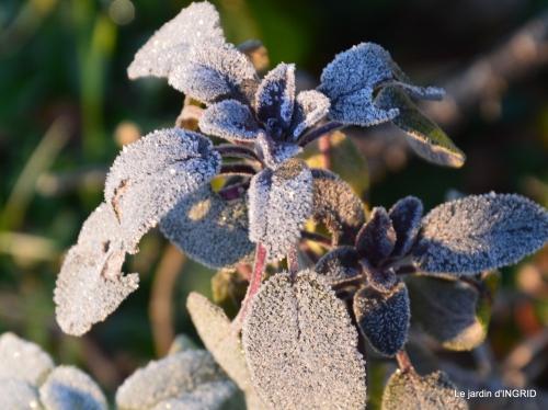 première gelée,compositions florales à garder,jardin 002.JPG