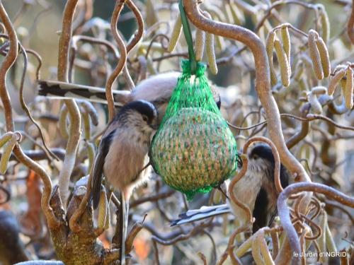 jardin givré,oiseaux 060.JPG