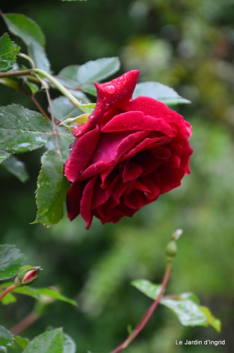 jardin,roses,cabane 123.JPG
