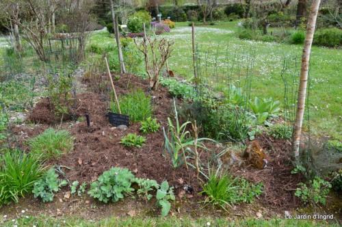 jardin ,cane sauvage,paquerettes,tulipes 126.JPG