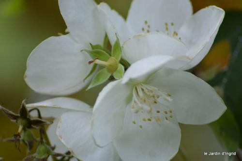 coeur des fleurs,papillons,libellules 201.JPG