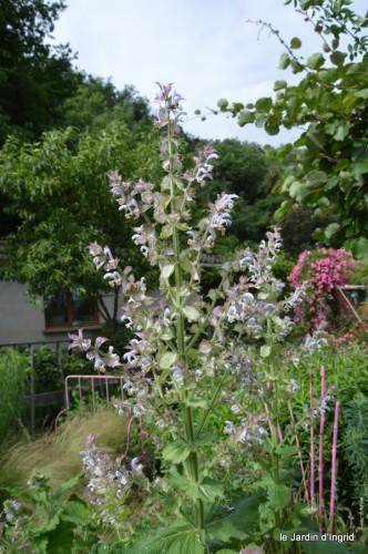 jardin,potager,roses,sauges 112.JPG