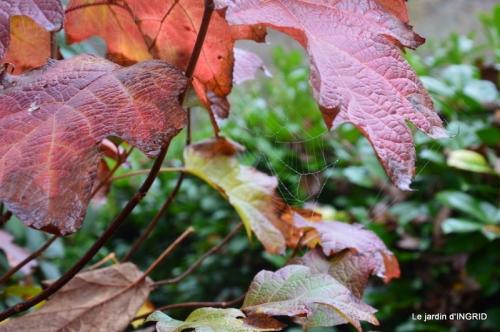 Brouillard,cypres chauve,jardinage 030.JPG
