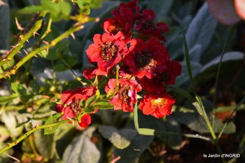 tour de jardin,bouquet,chez Bernadette, 003.JPG