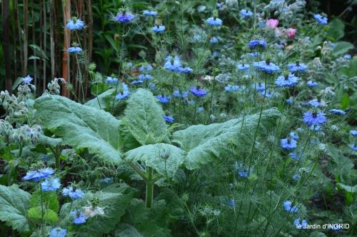 jardin,chez Bernadette,puces,cygnes,pluie 051.JPG