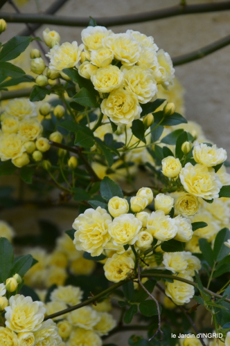 colline,orchidée,nature,jardin fleuri 024.JPG