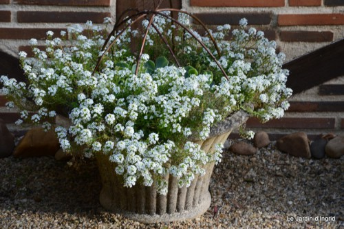 jardin,fleurs blanches 064.JPG