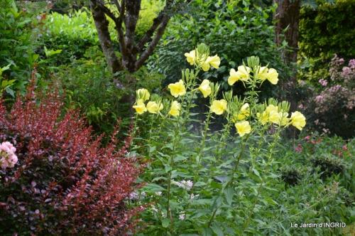 jardin juin,cabane,bouquet 105.JPG
