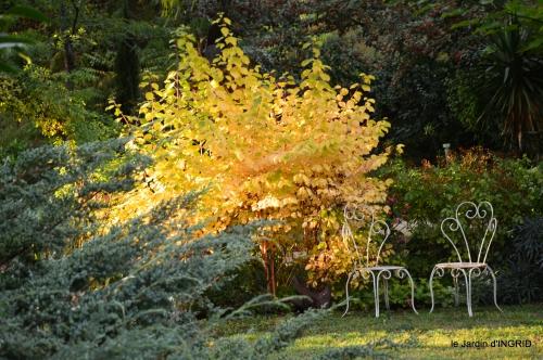 clair de lune,jardin automne,coucher de soleil 066.JPG
