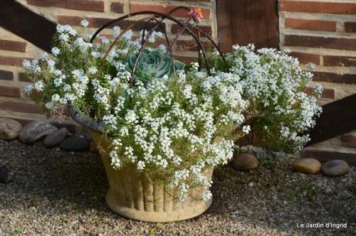 jardin,fleurs blanches 065.JPG