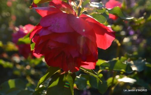 jardin Mme Perichou,grandes fleurs,bouquet,jardin 124.JPG