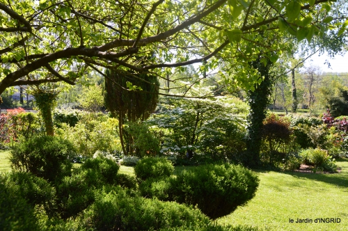 rosier de banks,jardin,cygnes,osier 029.JPG