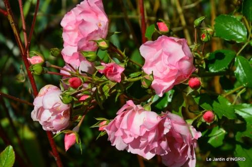 jardin pour l'automne,affiche vide jardin 049.JPG