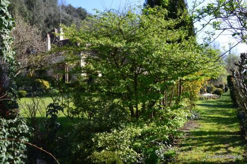 tour du jardin printemps 020.JPG
