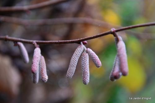 les tons roses,choux frisés,automne 064.JPG