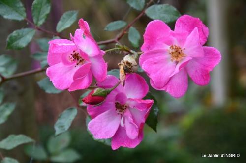 brume,dentelles,fleurs,Noel Jardiland 042.JPG