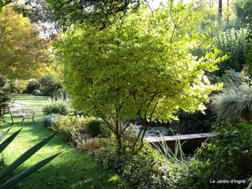 jardin 2010 2011 les plus belles 017.JPG