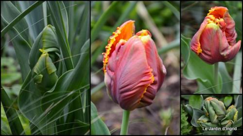 2014-04-06 tillandsia,rainette,terreau,jardin.jpg
