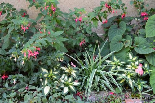 dahlias,jardin,puces st Avit Seigneur,Paniers Issigeac,Romane 069.JPG