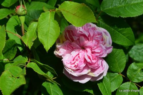jardin,roses,cabane 032.JPG