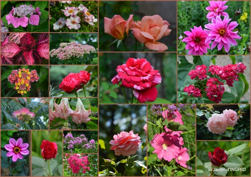 2016-07-11 jardin,papillons,Cadouin,légumes,Sophie,3.jpg
