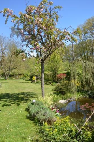 iris,arbre de judée,pivoine,Arya,viburnum,pts plants,cytise,akéb 103.JPG