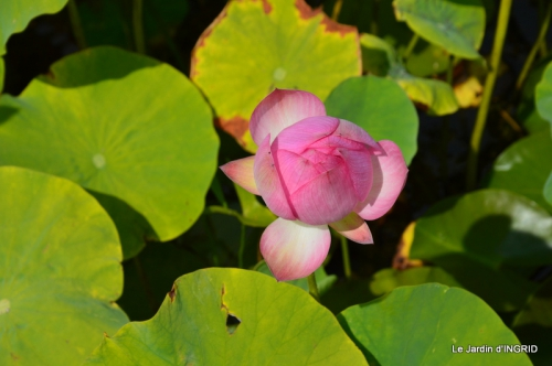 les jardins d'eau de Carsac 014.JPG