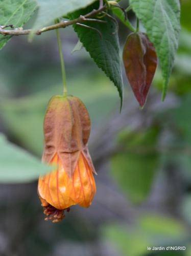 brocante st avit Se.jardin st Avt,récolte tomates 196.JPG
