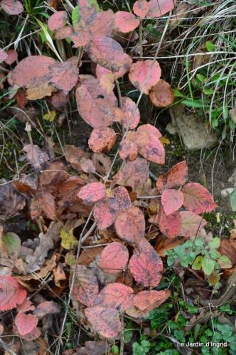 les tons roses,choux frisés,automne 078.JPG