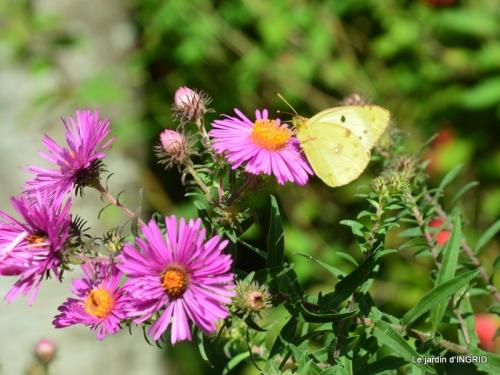 petit jardin,bouquet coings,le BOURNAT 046.JPG