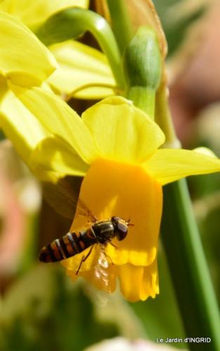 jardinière,insectes,achats 018.JPG