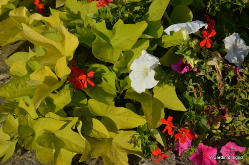 jardin,fruits,Caro,papillons,manthe religieuse,Lalinde 077.JPG