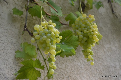 jardin,fruits,Caro,papillons,manthe religieuse,Lalinde 023-001.JPG