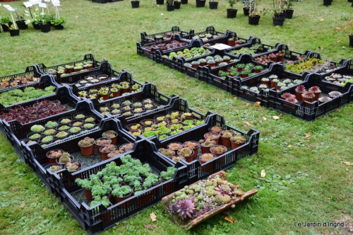 jardin,St Avit Seigneur brocante,Neuvic fête des plantes 103.JPG