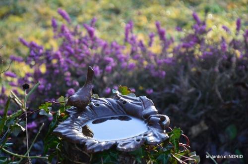 premières fleurs février,la pluie,la fauvette,hélébores 032-002.JPG