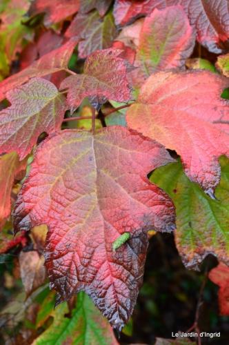 les tons roses,choux frisés,automne 008.JPG