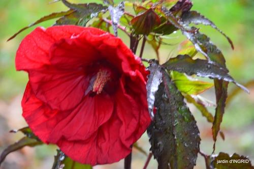 Neuvic,jardin,champignons canal 145.JPG