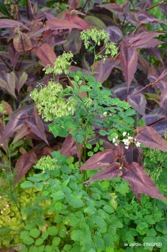 jardin,chez Bernadette,puces,cygnes,pluie 142.JPG