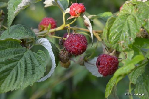 jardin,fruits,Caro,papillons,manthe religieuse,Lalinde 060.JPG