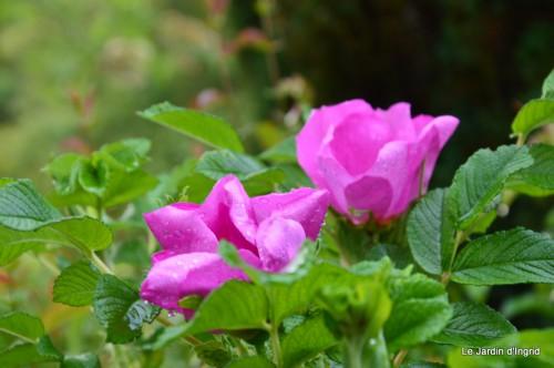 jardin,roses,cabane 147.JPG