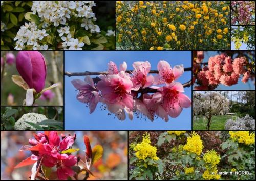 2015-04-17 jardin avril,tulipes pivoine,iris d'eau,chenilles.jpg
