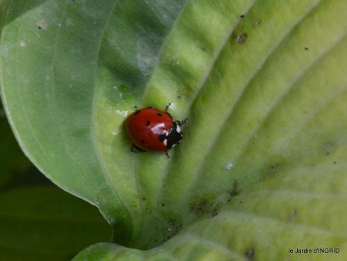 insectes,Romane ,lalinde,jardin 007.JPG