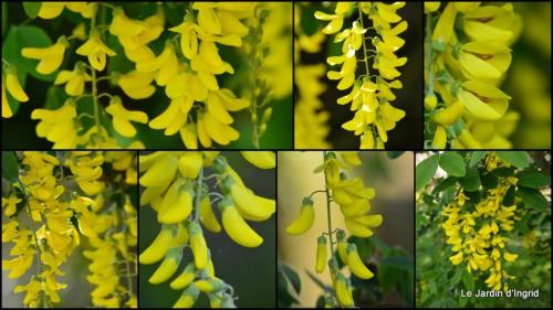 2014-04-15 Ciron,pivoine,escargot,jardin,ancolie,glycine1.jpg