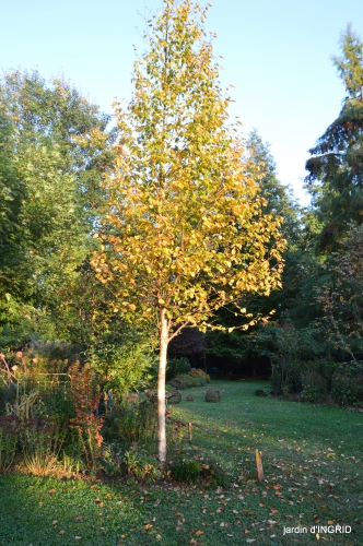 Jardin à l'automne 145.JPG