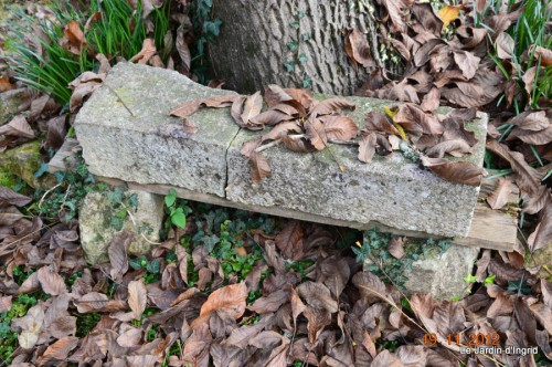 plectanthrus,taille avec fabien albizia,automne 076.JPG