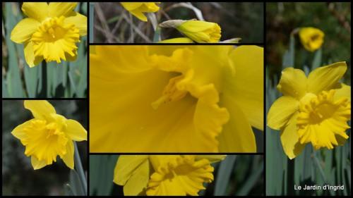 2014-02-21 jonquilles,tableau d'ambience,champignons,gouttes d'eau1.jpg