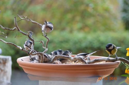 mésanges, nid frelons,fleurs décembre 084.JPG