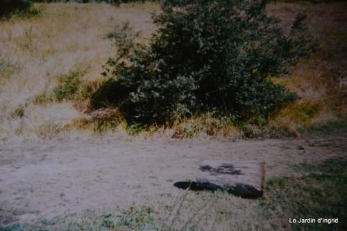 jardin,le cypres chauve,puces Mouleydier,vieilles photos 135.JPG